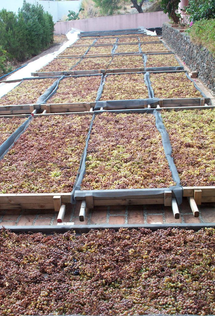 Malvasia grapes drying on drying mats